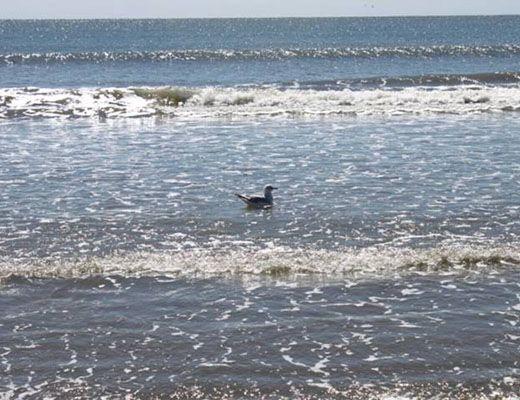Seascape 3522 - 1 Bdrm - Kiawah Island