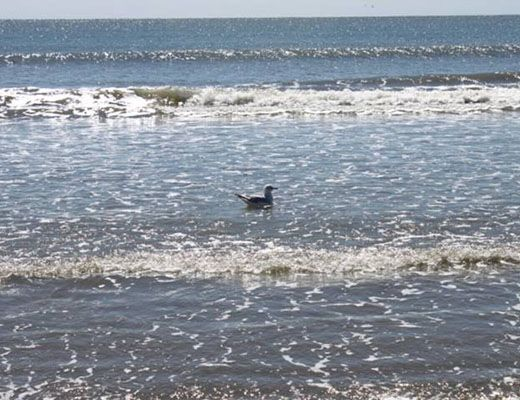 Windswept Woodlands 4402 - 1 Bdrm - Kiawah Island